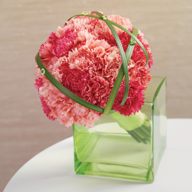 Carnations, the New Sensation!