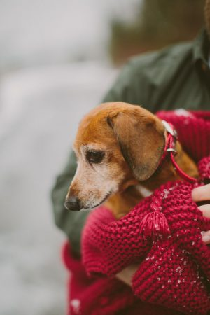 Cute engagement pet - Shaunae Teske Photography