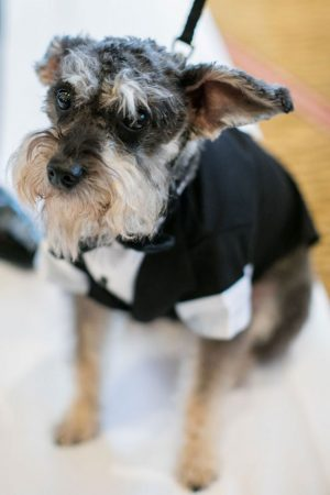 Wedding dog - Clane Gessel Photography