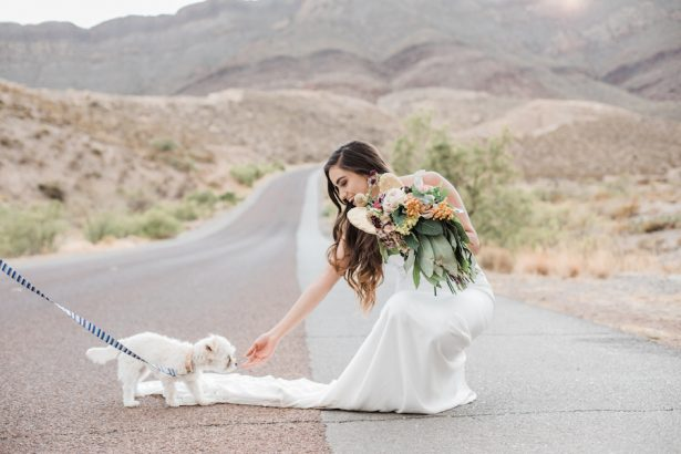 Bride and dog - Coffee Creative Photography