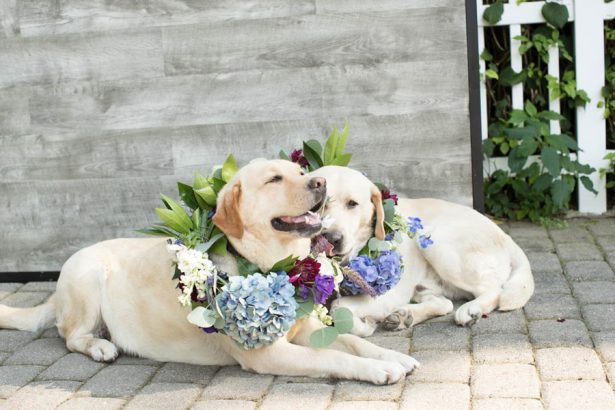 Cute Wedding Dogs - Images by Berit