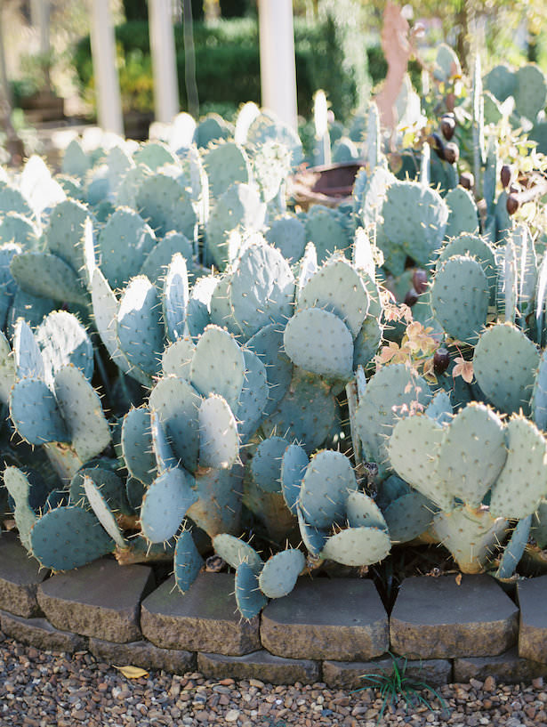 Wedding Venue with Cactus - - Juicebeats Photography