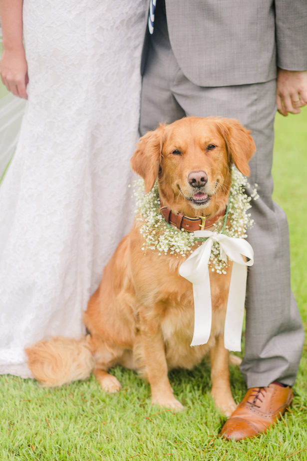 Wedding Photo with Dog - Allison Nichole Photography