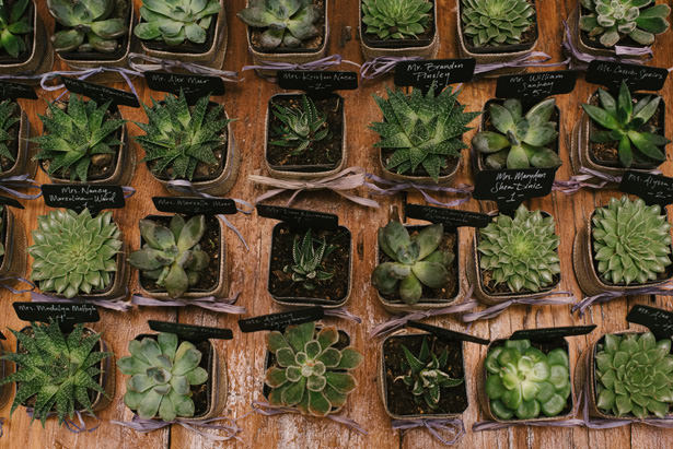 succulent Wedding Favors - Williamsburg Photo Studios