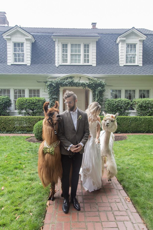 Wedding Llamas - Szu Designs, Inc