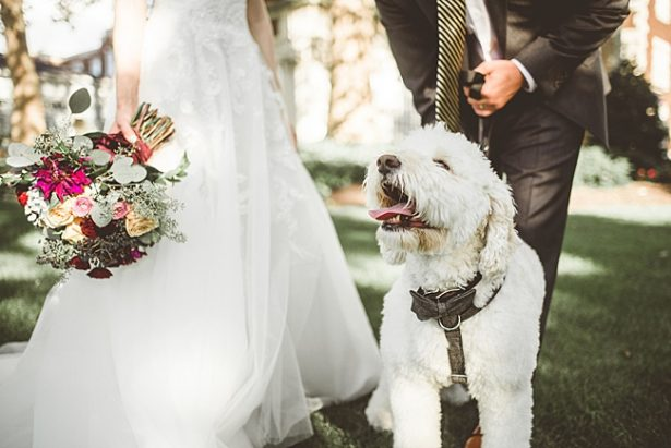 Goldendoodle dog ring bearer with bow tie - Aileen Elizabeth Photography